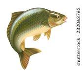 carp fish vector illustration | Shutterstock .eps vector #232063762