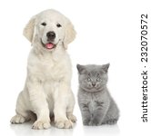 Stock photo cat and dog together in front of white background 232070572
