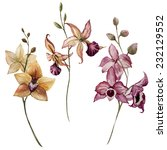 orchid  vector  watercolor | Shutterstock .eps vector #232129552