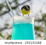 blue curacao drink and the... | Shutterstock . vector #232131268