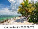 Palm Beach. Palm Trees On A...