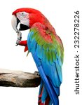 Beautiful Bird Greenwinged...