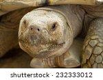 Head Of Elongated Tortoise