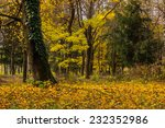 trees with foliage in autumn...   Shutterstock . vector #232352986