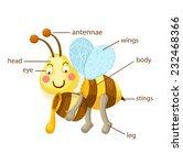 illustration of bee vocabulary...   Shutterstock .eps vector #232468366