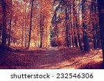 autumn park forest  landscape... | Shutterstock . vector #232546306