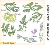 hand drawn cosmetic herbs.... | Shutterstock . vector #232565506