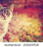 Portrait Of Cat E Against...