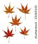 dry maple leaves | Shutterstock . vector #23265142