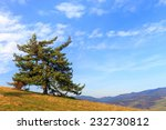 lonely tree  in the mountains  | Shutterstock . vector #232730812