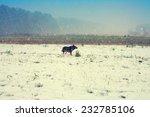 Snowstorm In Winter Snowy Fiel...