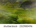 Green Nature Of Bird Eye View