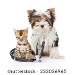 Stock photo small bengal cat and biewer yorkshire terrier puppy with stethoscope on his neck isolated on white 233036965