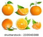 vector collection of fresh ripe ... | Shutterstock .eps vector #233040388