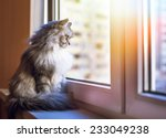 Stock photo beautiful grey cat sitting on windowsill and looking to a window 233049238