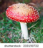 Fine Grown Fly Agaric