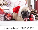 Stock photo puppy christmas french bulldog 233191492