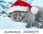 Lying Little Kitten Wearing...