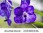 Small photo of Bouquet of purple orchids.(Vanda)