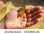 butterfly on hand | Shutterstock . vector #233388136