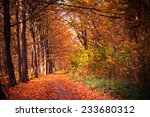 autumn forest trees. nature... | Shutterstock . vector #233680312