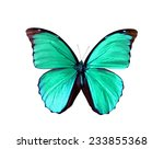 Stock photo blue green morpho butterfly isolated zoology wild entomology one alive exotic butterflies with 233855368