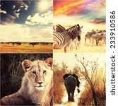 african safari collages | Shutterstock . vector #233910586