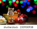 Stock photo funny kitten coming out of a gift box with bokeh background of christmas lights 233930938