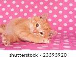 A Yellow Kitten On A Pink Polk...