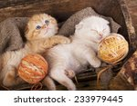 Stock photo kittens sleeping with a ball of wool 233979445