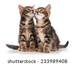 Stock photo two serious cute kittens isolated on white background cutout 233989408