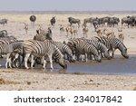 wildlife at sonderkop waterhole ... | Shutterstock . vector #234017842