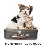 Stock photo biewer yorkshire terrier and bengal cat sitting on a bag isolated on white background 234038902