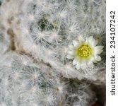 Macro Soft Hair Of Cactus