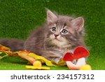 Stock photo cute gray kitten playing on artificial green grass 234157312