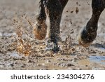Horse's Legs In The Dirty Water