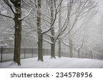 Snowy Trees And Fence Along...