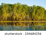 Water Lilies And Reflections O...
