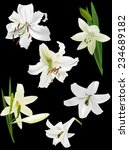 illustration with white lily... | Shutterstock .eps vector #234689182