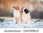Two Puppies Playing Outdoors I...