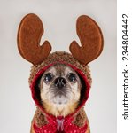 chihuahua isolated in reindeer... | Shutterstock . vector #234804442