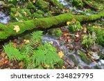 Log Fallen Across A Stream Of...