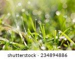 water drops on a green grass | Shutterstock . vector #234894886