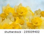 spring floral border  ...