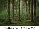 View Inside Of The Forest On...