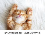 Stock photo cute little red kitten sleeps on fur white blanket 235089946