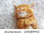 Stock photo cute little red kitten sleeps on fur white blanket 235089952
