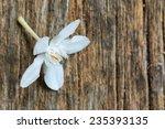 white flower on wood | Shutterstock . vector #235393135