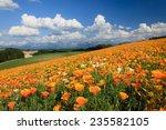 flower garden | Shutterstock . vector #235582105