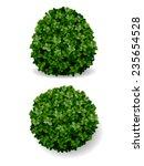 two round bush decorative plant ... | Shutterstock .eps vector #235654528